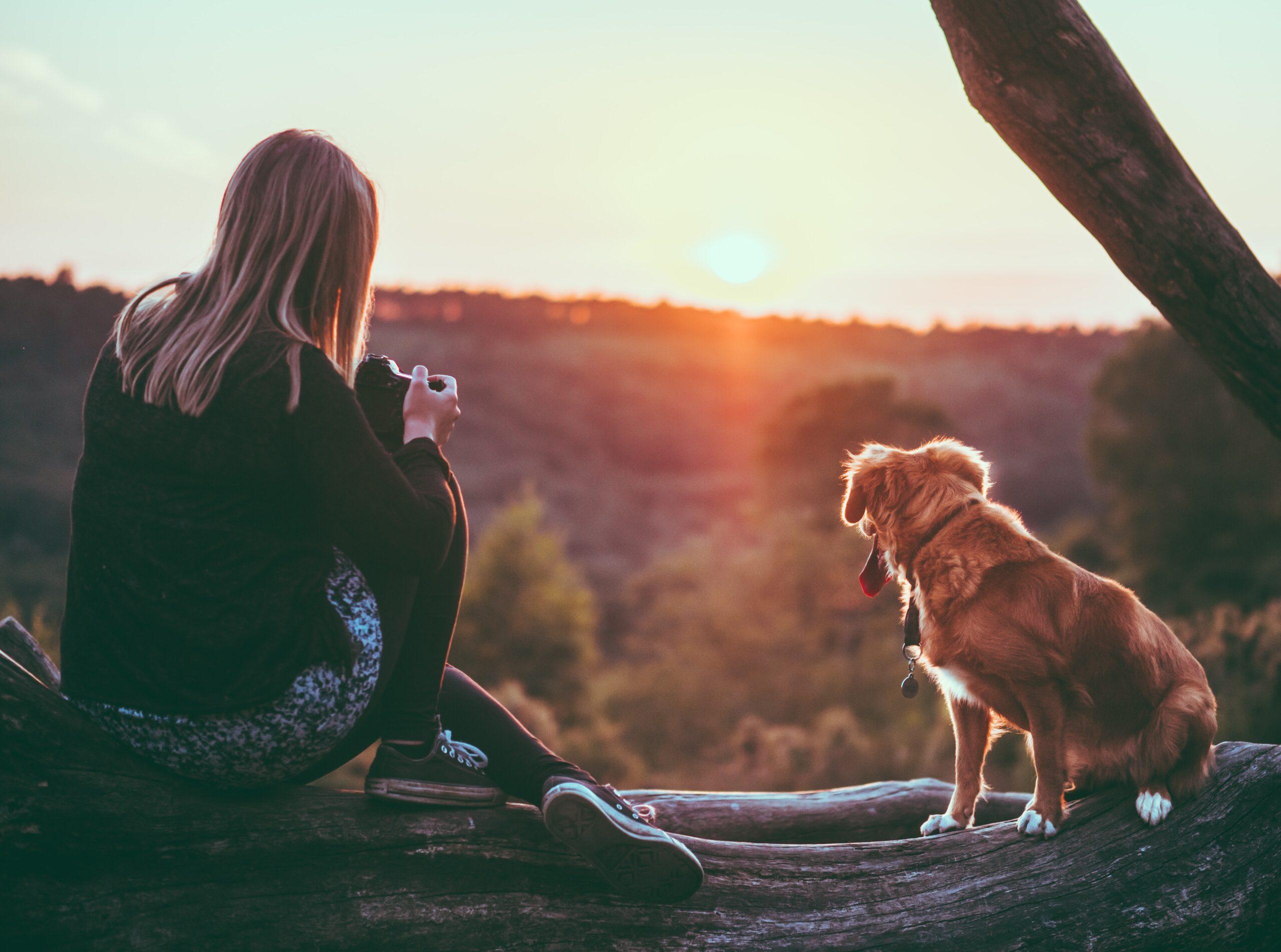 Hund und Mensch Kommunikation